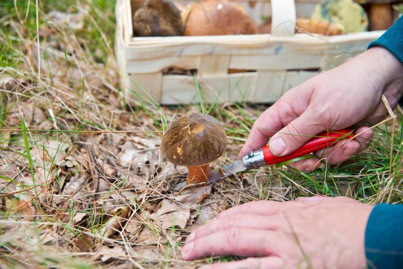 Herbstzeit ist Pilzzeit - Wissenswertes