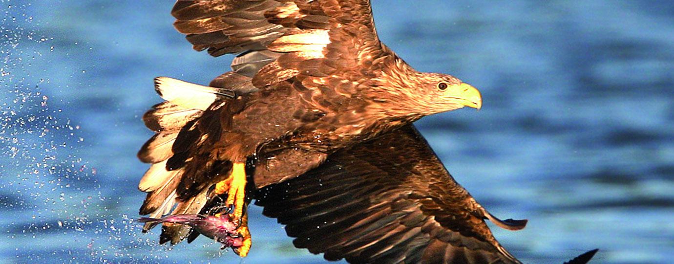 Herbsturlaub: Adler