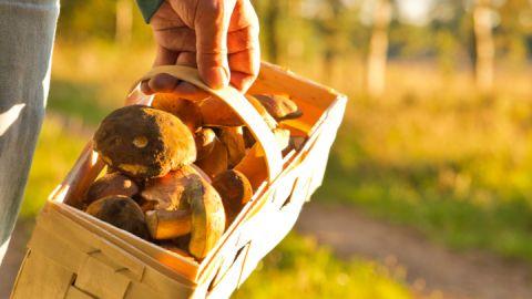 Herbsturlaub: Pilze sammeln