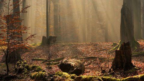 Nebelwald, Mecklenburgische Seenplatte
