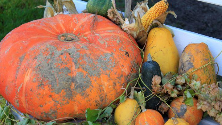 Mittelalterlicher Herbstmarkt